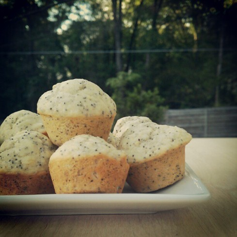 vegan, lemon, poppy seed, muffins, ethical, potluck